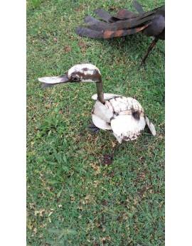 Canard  blanc chamu