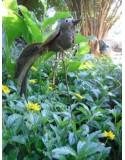 Tuteurs décoratifs pour le jardin